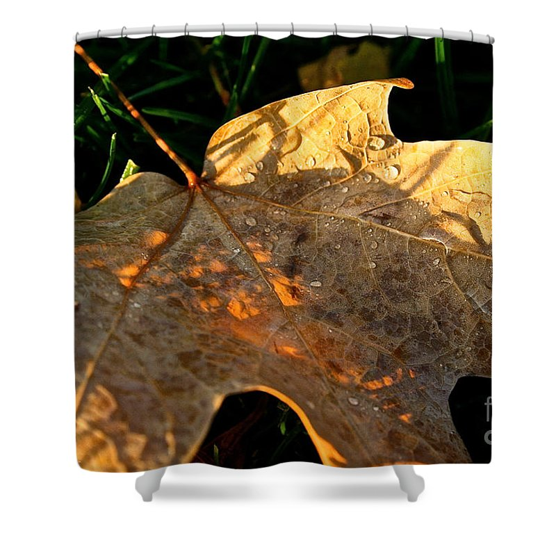 Outdoors Shower Curtain featuring the photograph October's Golden Morning by Susan Herber