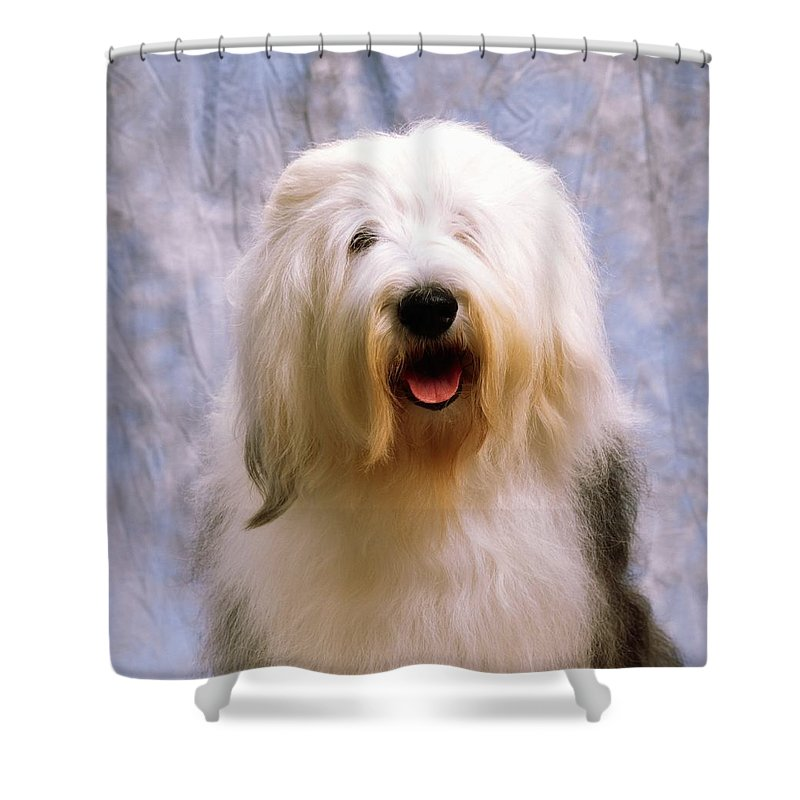 Breed Shower Curtain featuring the photograph Old English Sheepdog by The Irish Image Collection