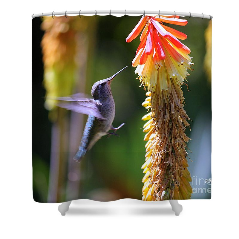 Hummingbird Shower Curtain featuring the photograph One For The Road by Patrick Witz