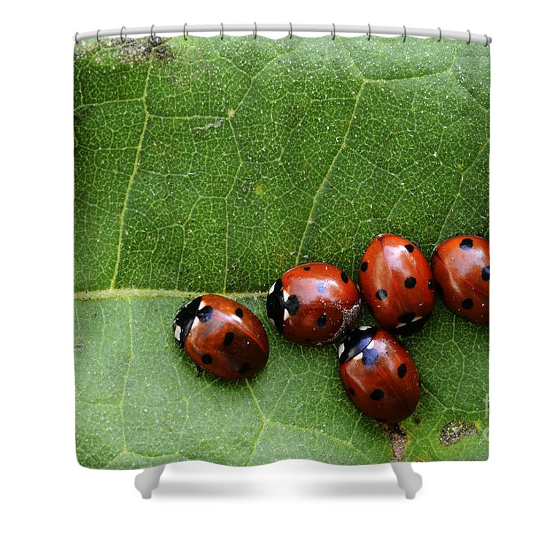 Ladybugs Shower Curtain featuring the photograph One Lady Bug Voted Off The Island by Bob Christopher