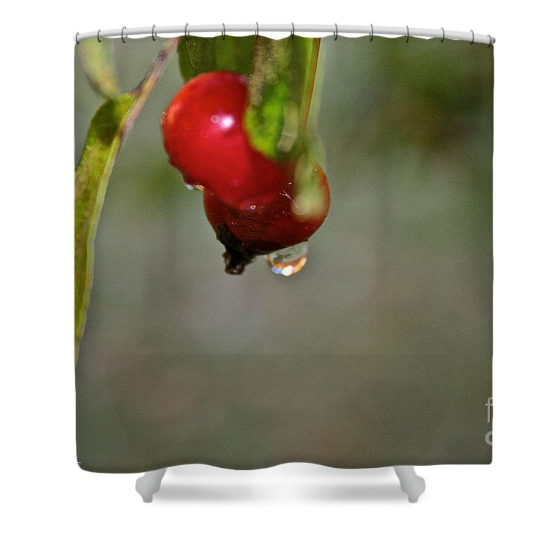 Outdoors Shower Curtain featuring the photograph One More Drip by Susan Herber