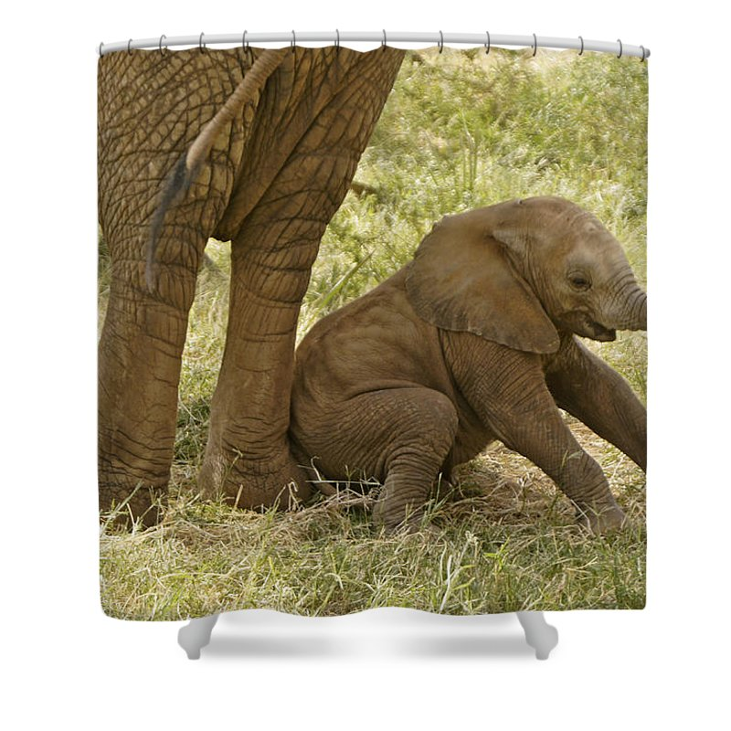 Africa Shower Curtain featuring the photograph Oops by Michele Burgess