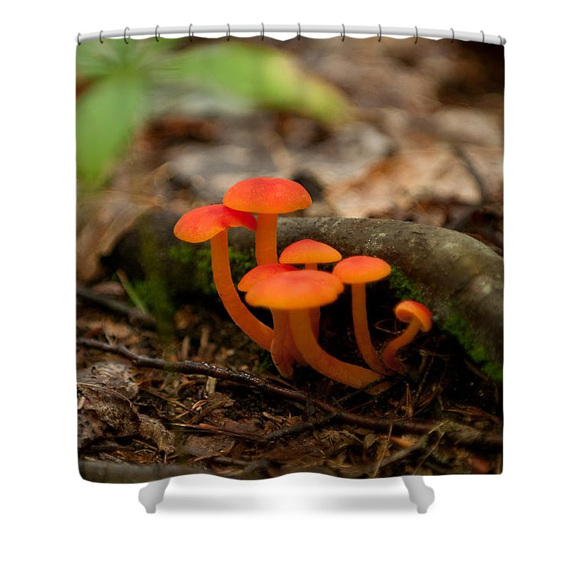 orange Mushrooms Shower Curtain featuring the photograph Orange Mushrooms by Paul Mangold