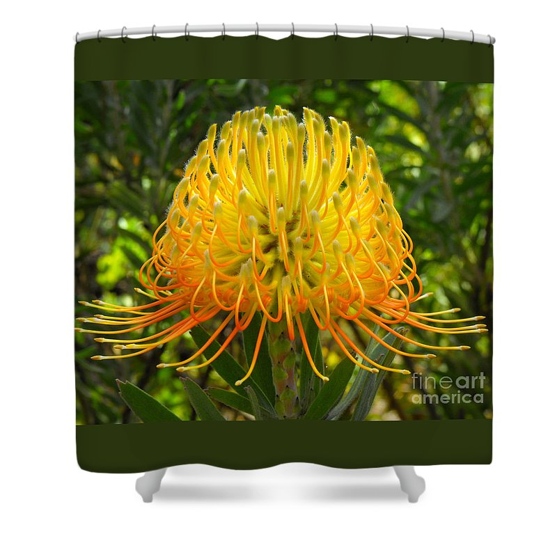 Flower Shower Curtain featuring the photograph Orange Protea Flower Art by Rebecca Margraf