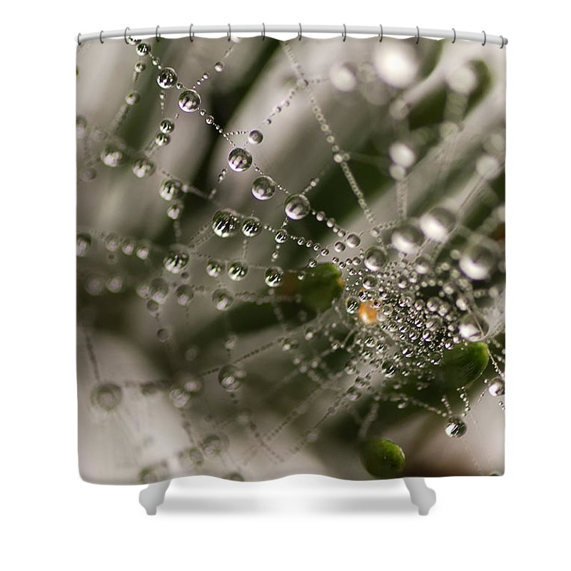 Web Shower Curtain featuring the photograph Orbiting The Web by Susan Capuano