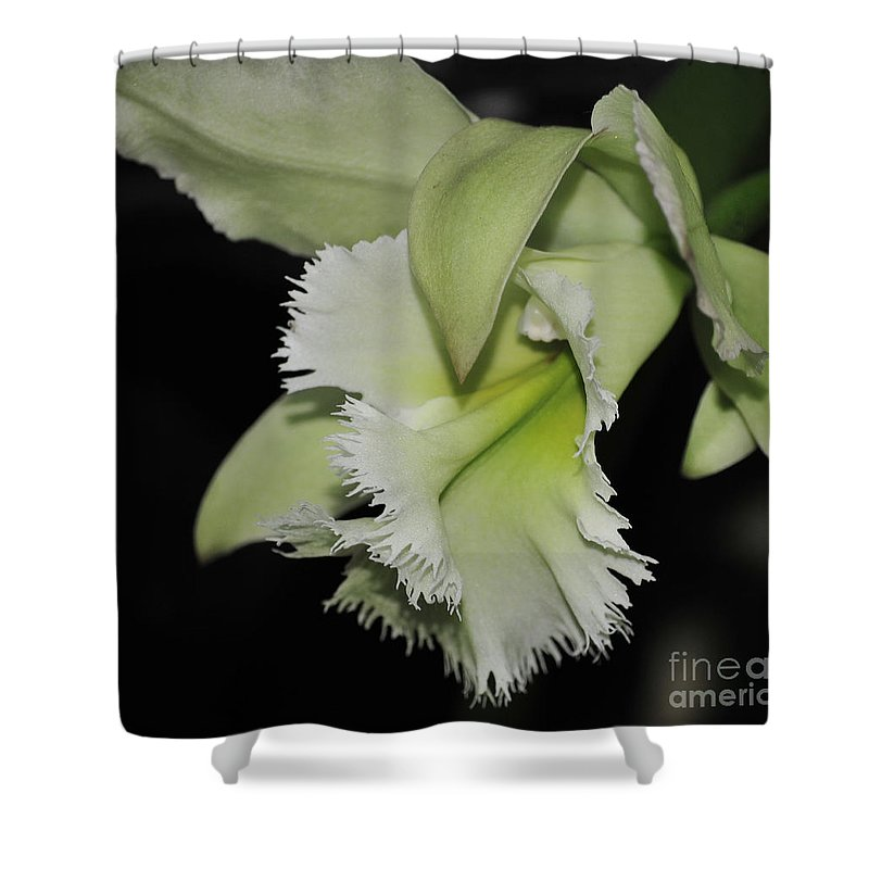 Orchid Shower Curtain featuring the photograph orchid 900 Brassolaeliocattleya Ruben's Verde Chantilly Green by Terri Winkler