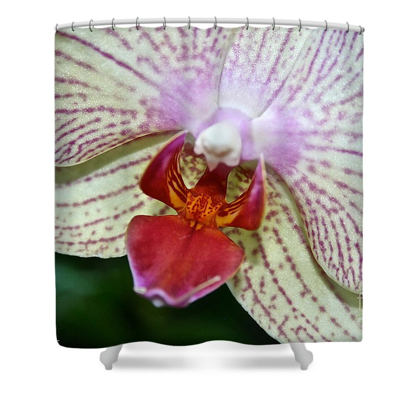 Tropical Plant Shower Curtain featuring the photograph Orchid Close Up by Susan Herber