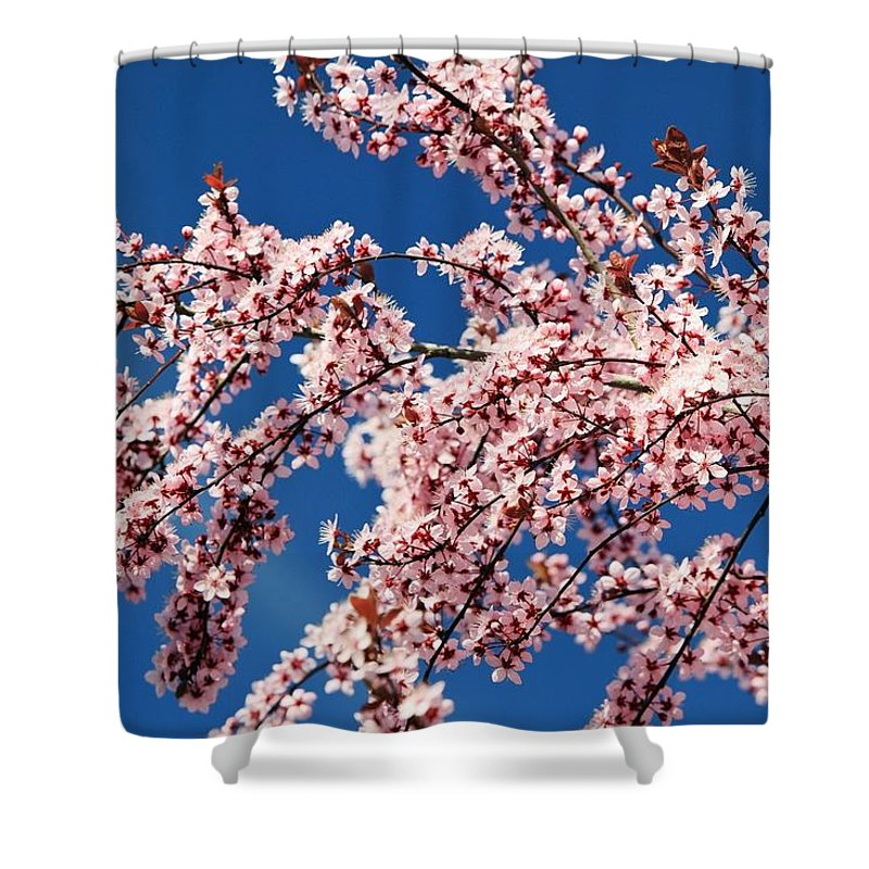 United States Of America Shower Curtain featuring the photograph Oregon, United States Of America Cherry by Craig Tuttle