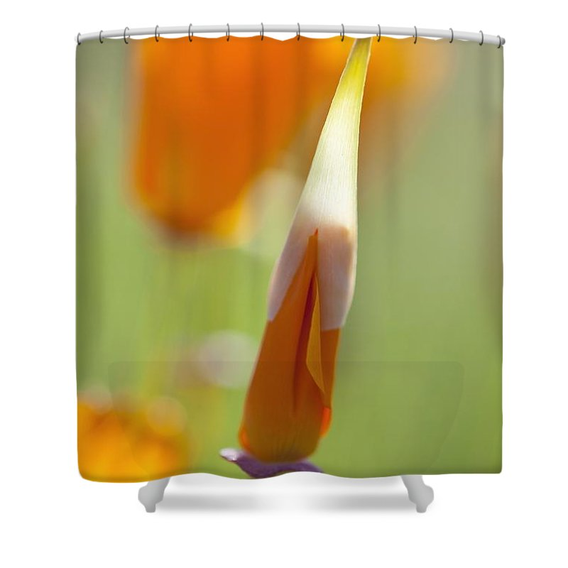 Mount Hood Shower Curtain featuring the photograph Oregon, United States Of America Poppy by Craig Tuttle