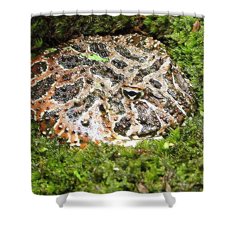 Ceratophrys Ornata Shower Curtain featuring the photograph Ornate Horned Frog by Laurel Talabere