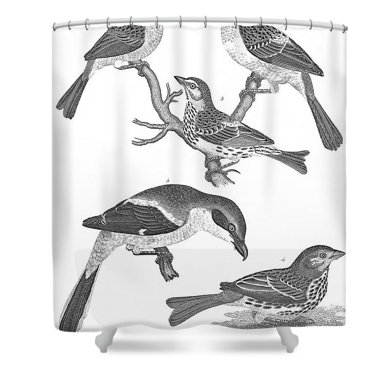 19th Century Shower Curtain featuring the photograph Ornithology, 19th Century by Granger