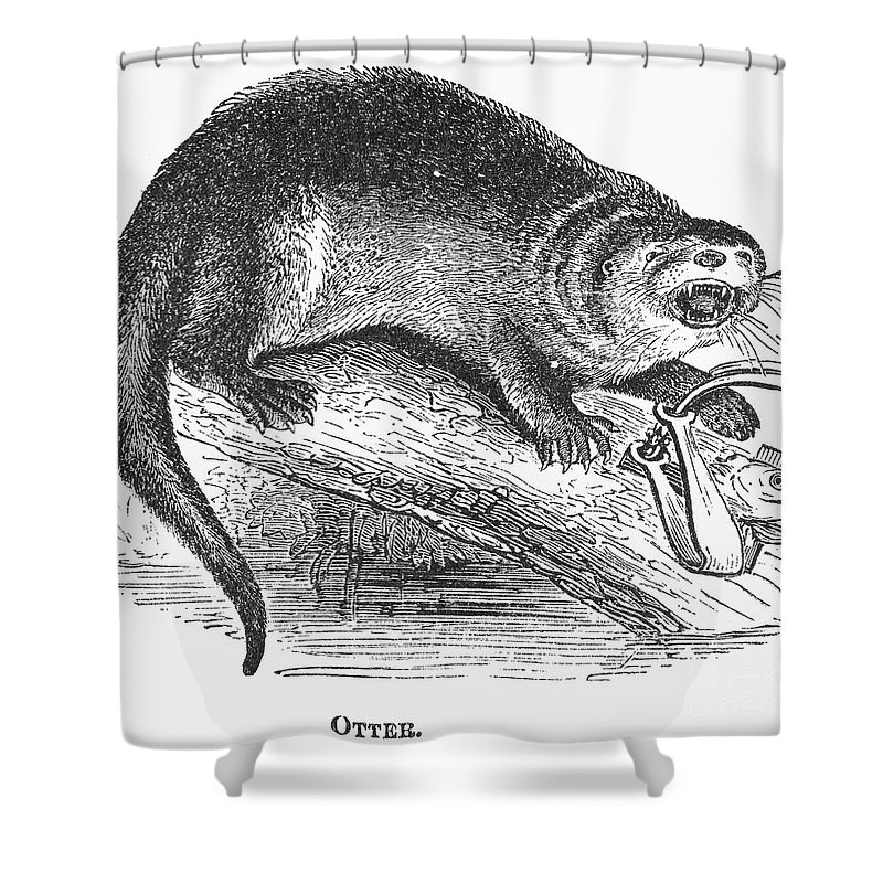 1873 Shower Curtain featuring the photograph Otter, 1873 by Granger