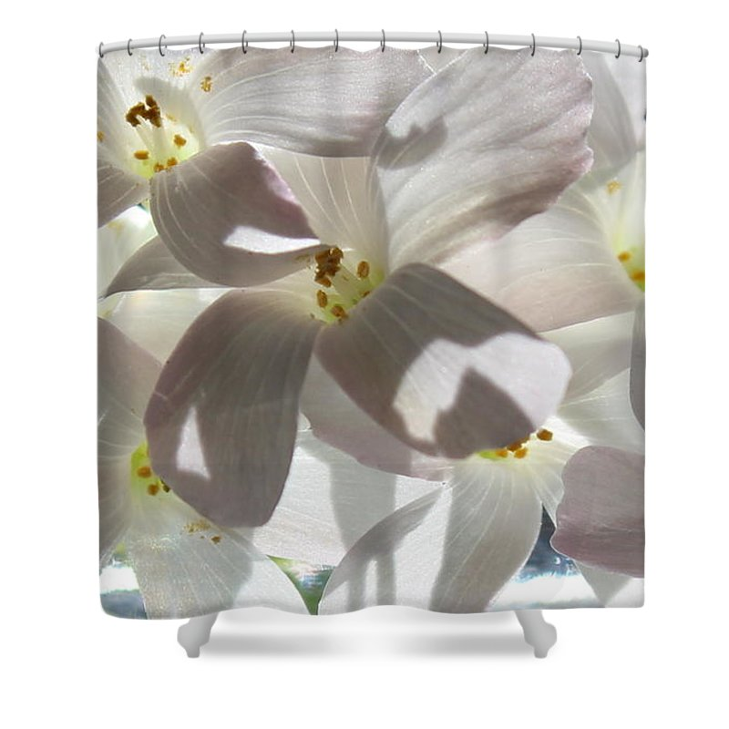 Floral Shower Curtain featuring the photograph Oxalis Flowers by Kume Bryant