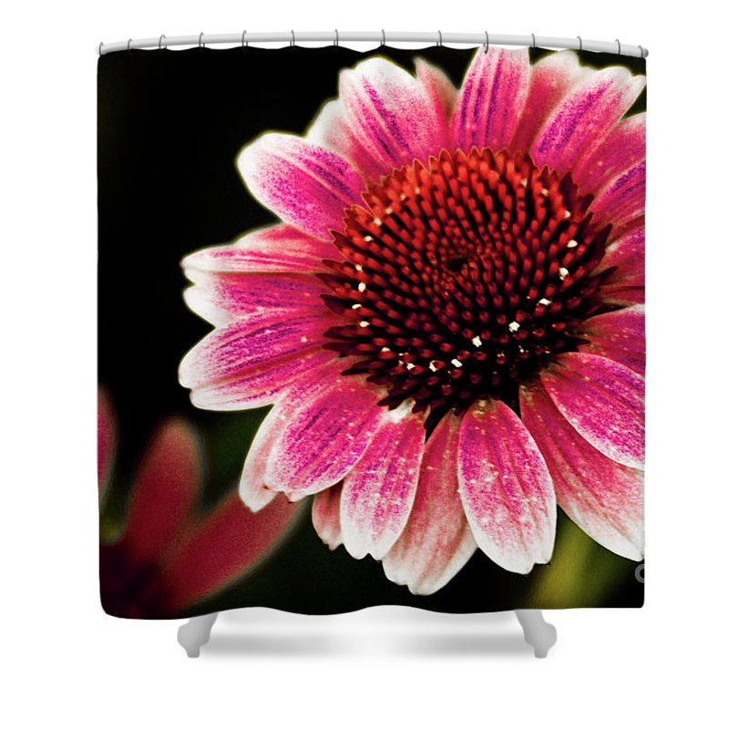 Sun Flower Shower Curtain featuring the photograph Paint The Sun by Kim Henderson