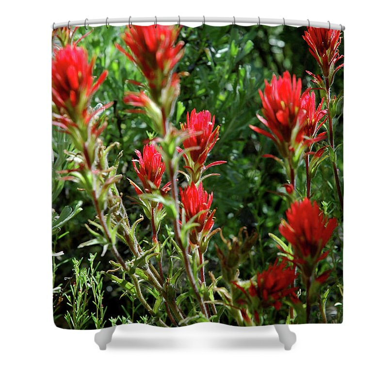Usa Shower Curtain featuring the photograph Painting In The Brush by LeeAnn McLaneGoetz McLaneGoetzStudioLLCcom
