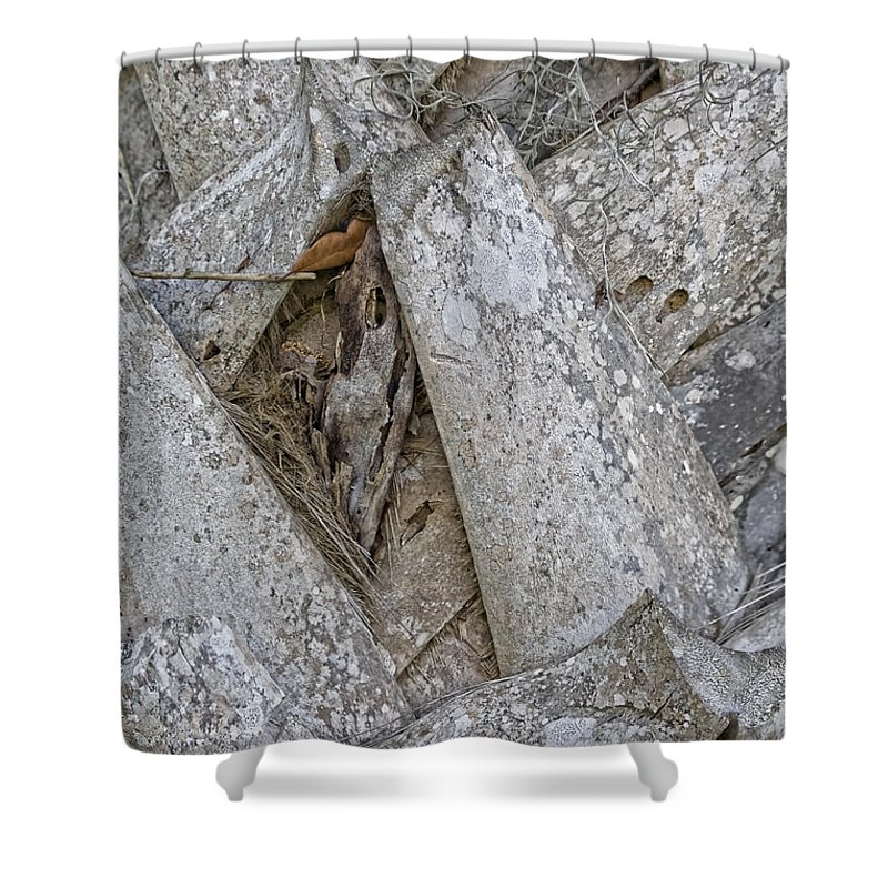 Palm Tree Shower Curtain featuring the photograph Palm Abstract by Deborah Benoit