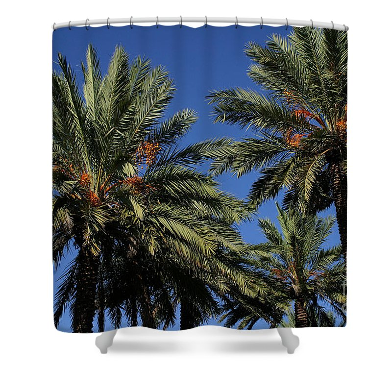 Gary Gingrich Shower Curtain featuring the photograph Palms 9838b by Gary Gingrich Galleries