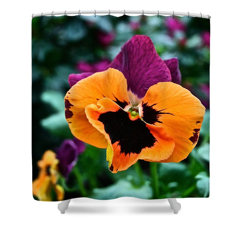 Tropical Plant Shower Curtain featuring the photograph Pansy Power by Susan Herber