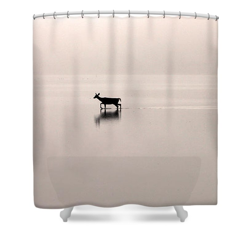 Deer Shower Curtain featuring the photograph Passing By On A Foggy Morning by Jack Schultz
