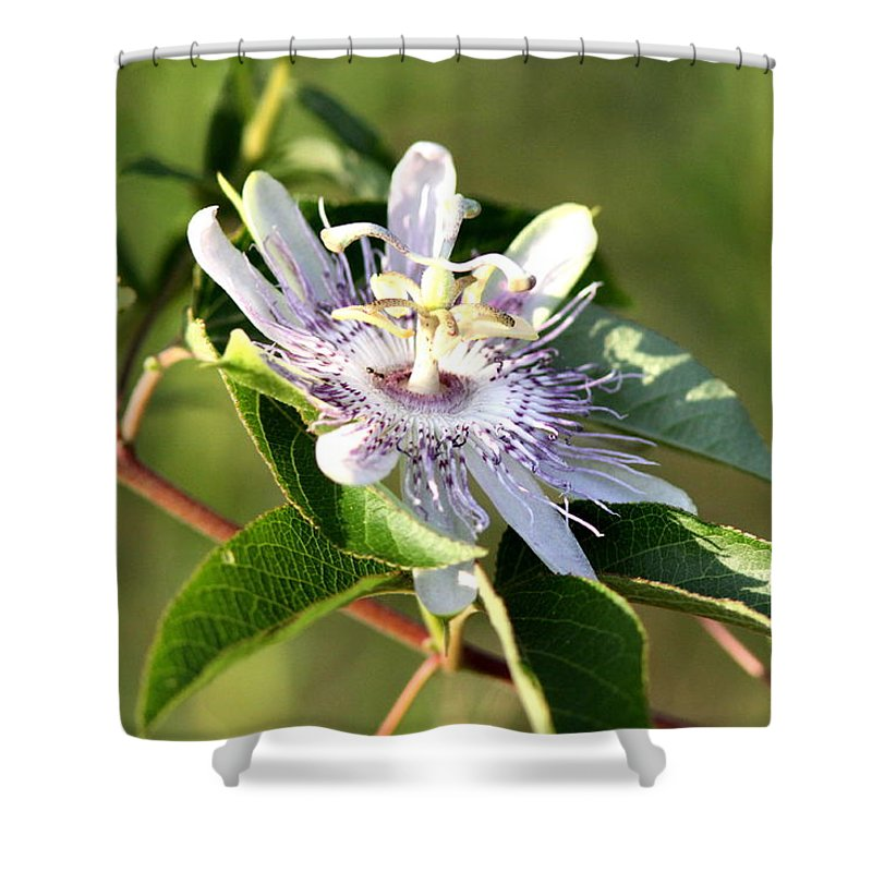 Passion Flower Shower Curtain featuring the photograph Passion Flower - May Pop Bloom by Travis Truelove