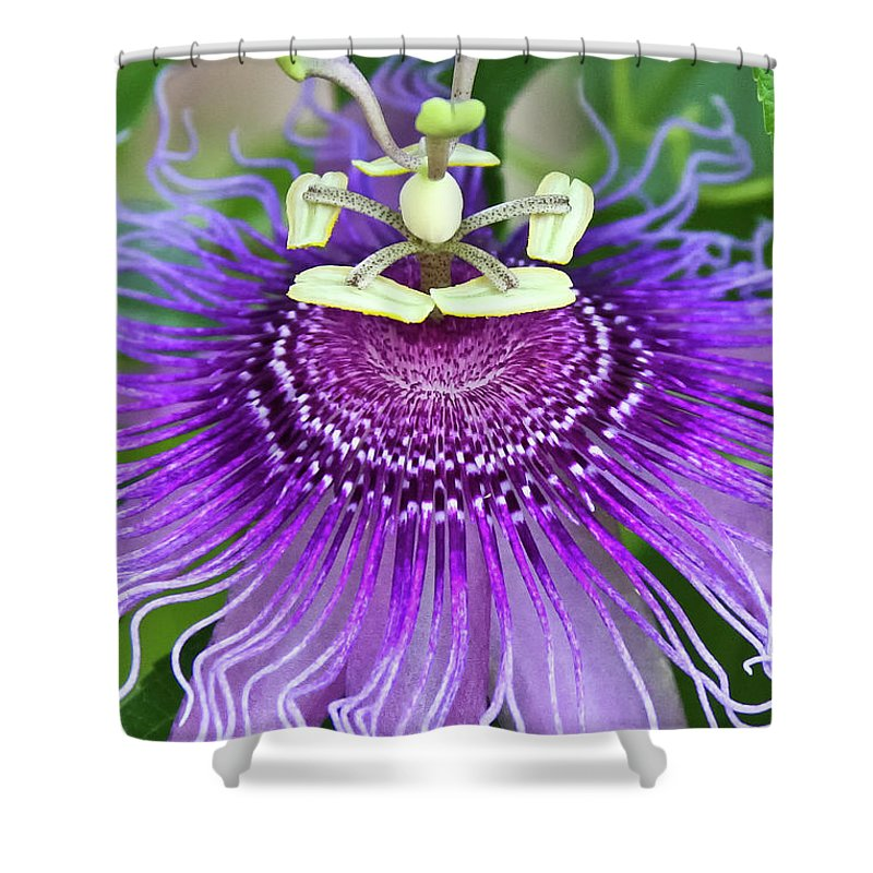Cultivated Flowers - Plants Shower Curtain featuring the photograph Passion Flower by Albert Seger