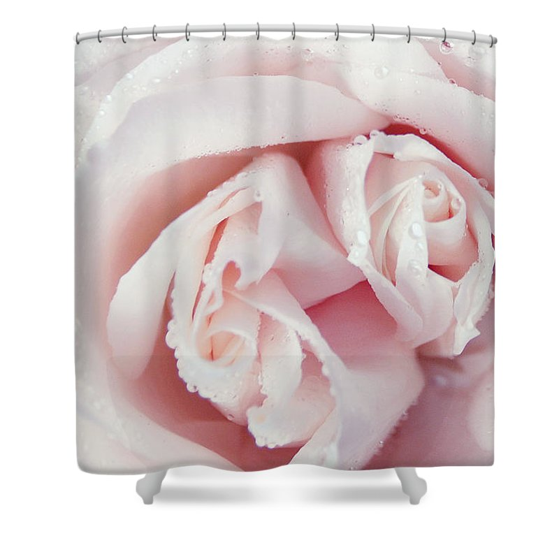 Flowers Shower Curtain featuring the photograph Passion For Flowers. One Rose Two Hearts by Jenny Rainbow