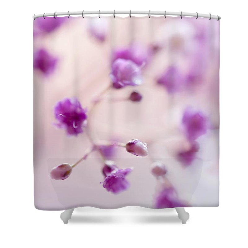 Jenny Rainbow Fine Art Photography Shower Curtain featuring the photograph Passion For Flowers. Purple Pearls Of Gypsophila by Jenny Rainbow
