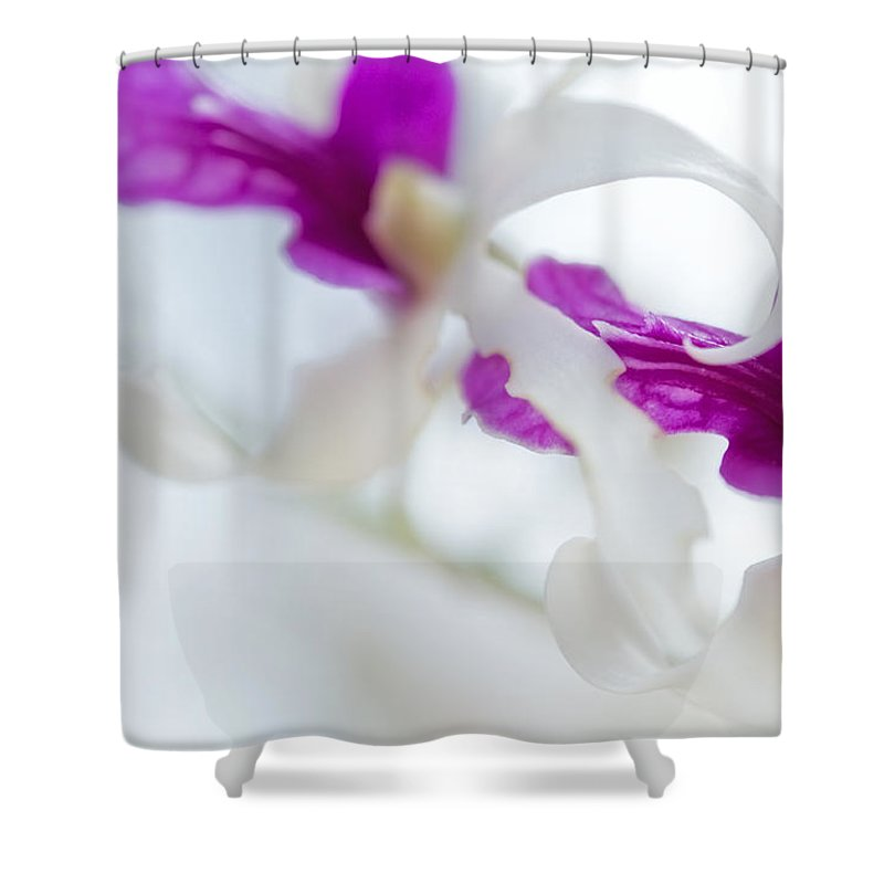 Flowers Shower Curtain featuring the photograph Passion For Flowers. Two by Jenny Rainbow