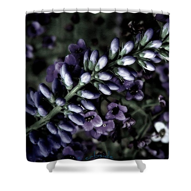 Veronica Shower Curtain featuring the photograph Pastel Veronica by Chris Berry
