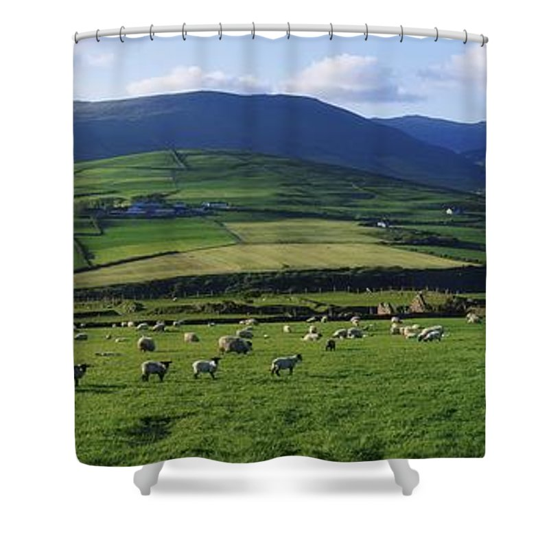 Anascaul Shower Curtain featuring the photograph Pastoral Scene Near Anascual, Dingle by The Irish Image Collection