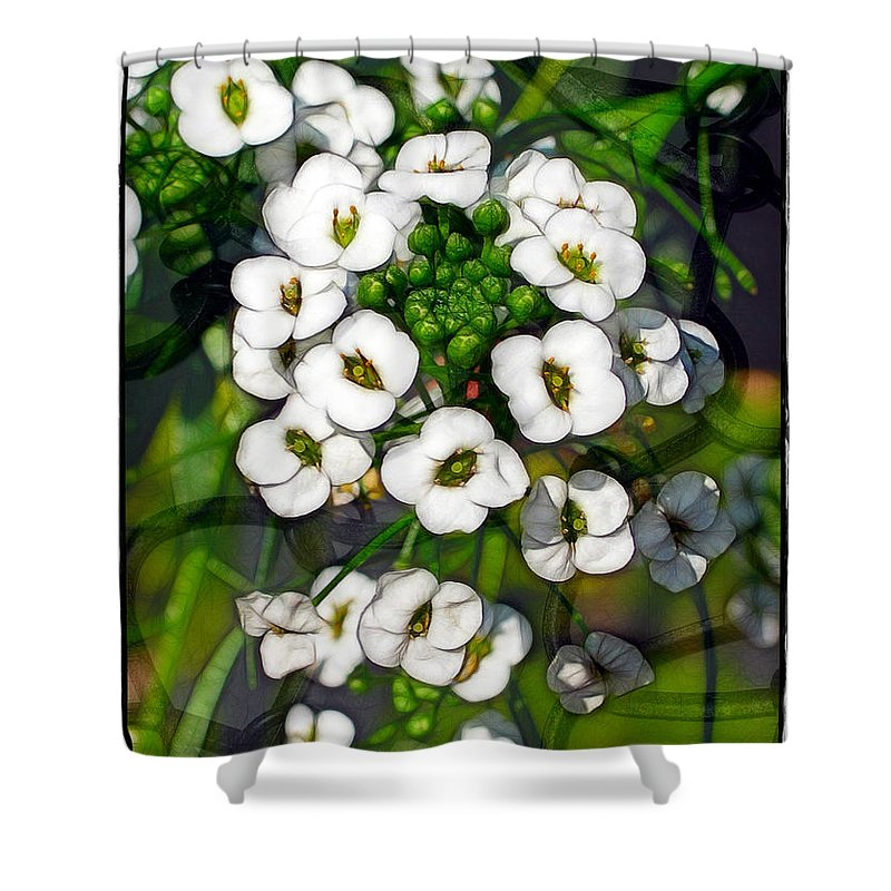 Flowers Shower Curtain featuring the photograph Pattern In Green And White by Judi Bagwell