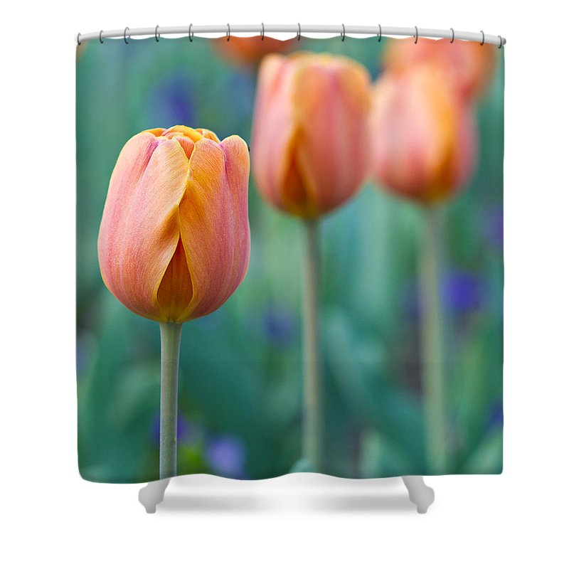 Tulips Shower Curtain featuring the photograph Peach Tulips Square Format by Bill Swindaman