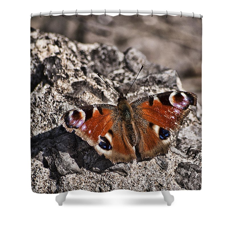 Peacock Butterfly Shower Curtain featuring the photograph Peacock Butterfly by Steve Purnell