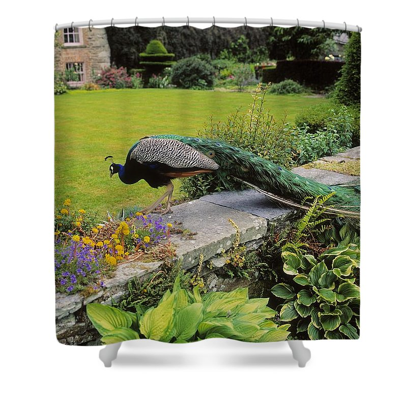 Architecture Shower Curtain featuring the photograph Peacock In Formal Garden, Kilmokea, Co by The Irish Image Collection