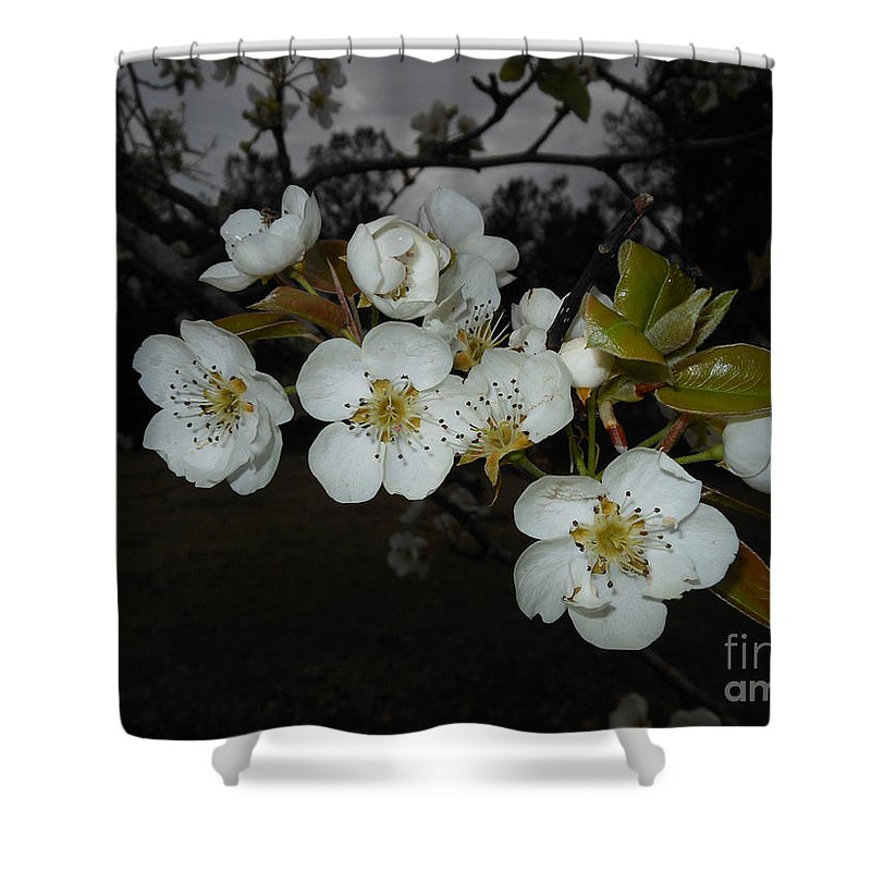 Flower Shower Curtain featuring the photograph Pear Blooms by Donna Brown
