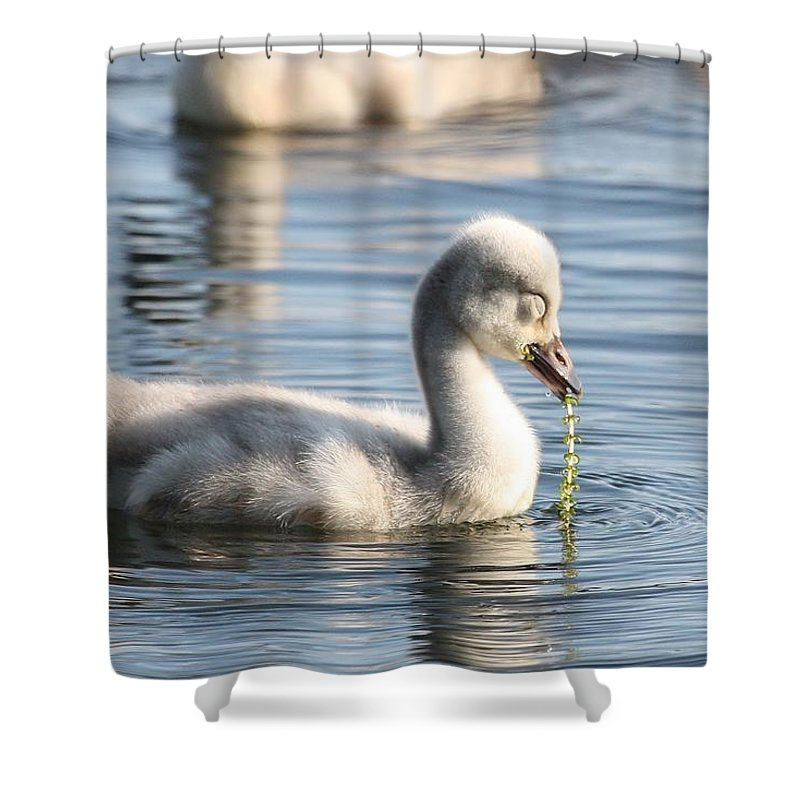 Cygnet Shower Curtain featuring the photograph Pearls Of Innocence by Teresa McGill