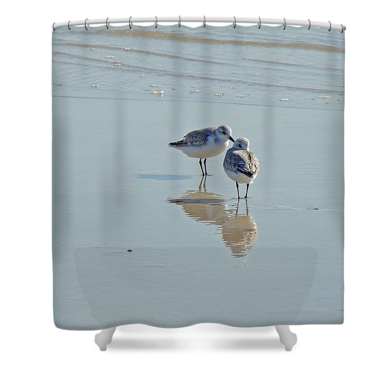 Birds Shower Curtain featuring the photograph Peeps At The Beach #3 by Mother Nature