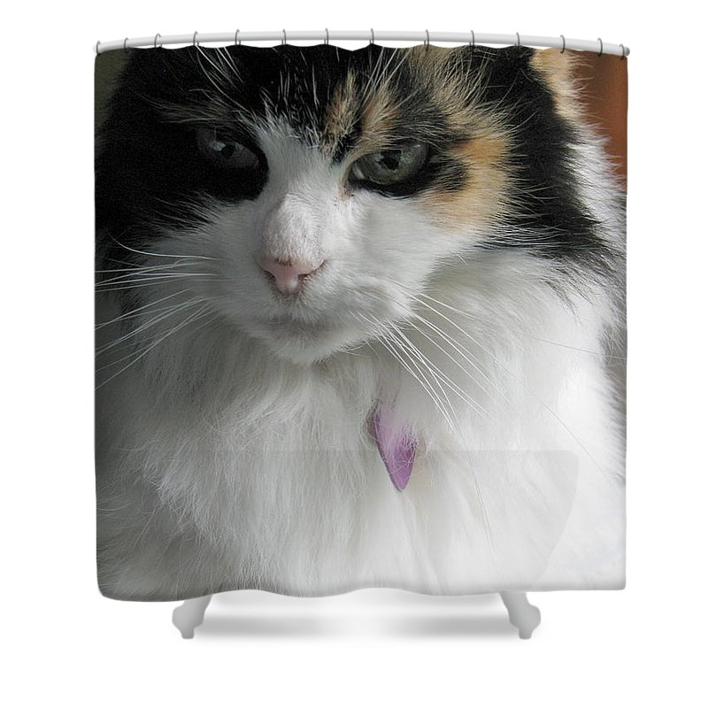 Cat Shower Curtain featuring the photograph Pensive by Rory Sagner