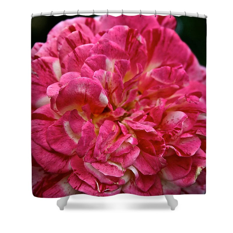 Garden Shower Curtain featuring the photograph Petals Petals And More Petals by Susan Herber