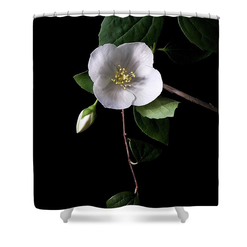 Flower Shower Curtain featuring the photograph Philadelphus by Endre Balogh