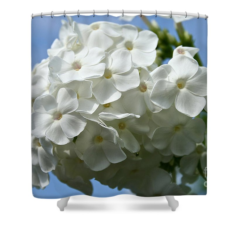 Plant Shower Curtain featuring the photograph Phlox Aka David by Susan Herber