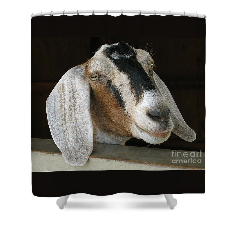 Goat Shower Curtain featuring the photograph Photogenic Goat by Ann Horn