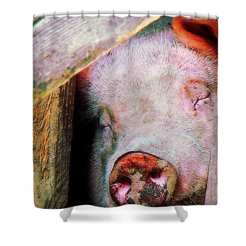 Farm Shower Curtain featuring the photograph Pig Sleeping by Susan Savad