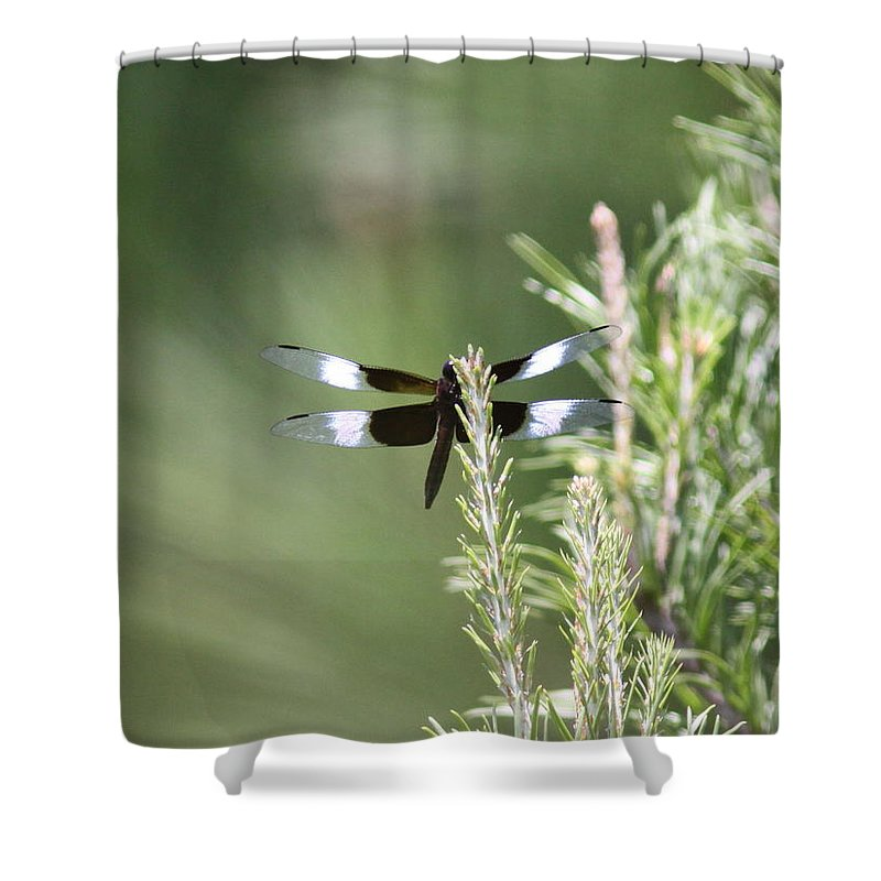 Shower Curtain featuring the photograph Pine Tip by Travis Truelove