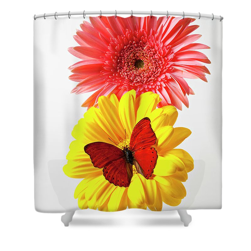 Mums Shower Curtain featuring the photograph Pink And Yellow Mums by Garry Gay