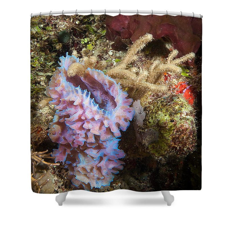 Belize Shower Curtain featuring the photograph Pink Corner Vase by Jean Noren