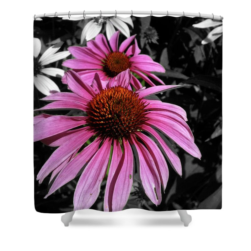 Coneflower Shower Curtain featuring the photograph Pink Cutout by Trish Hale