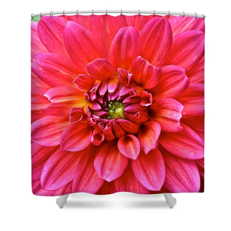 Garden Shower Curtain featuring the photograph Pink Dahlia by Susan Herber