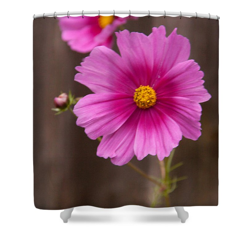 Floral Shower Curtain featuring the photograph Pink Flowers And Wood by Rebecca Akporiaye