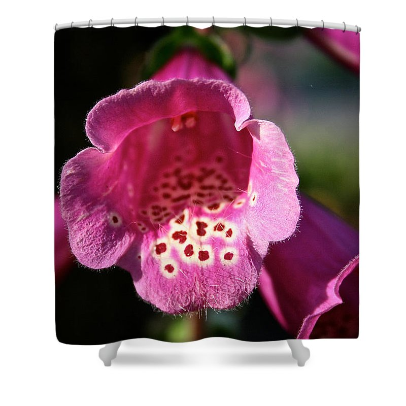 Outdoors Shower Curtain featuring the photograph Pink Foxglove by Susan Herber